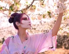 Geisha Sakura Hanami 11