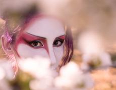 Geisha Sakura Hanami 4