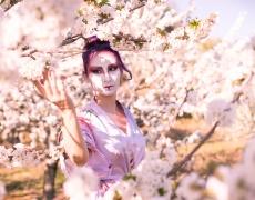 Geisha Sakura Hanami 10