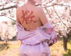 Geisha Sakura Hanami 6